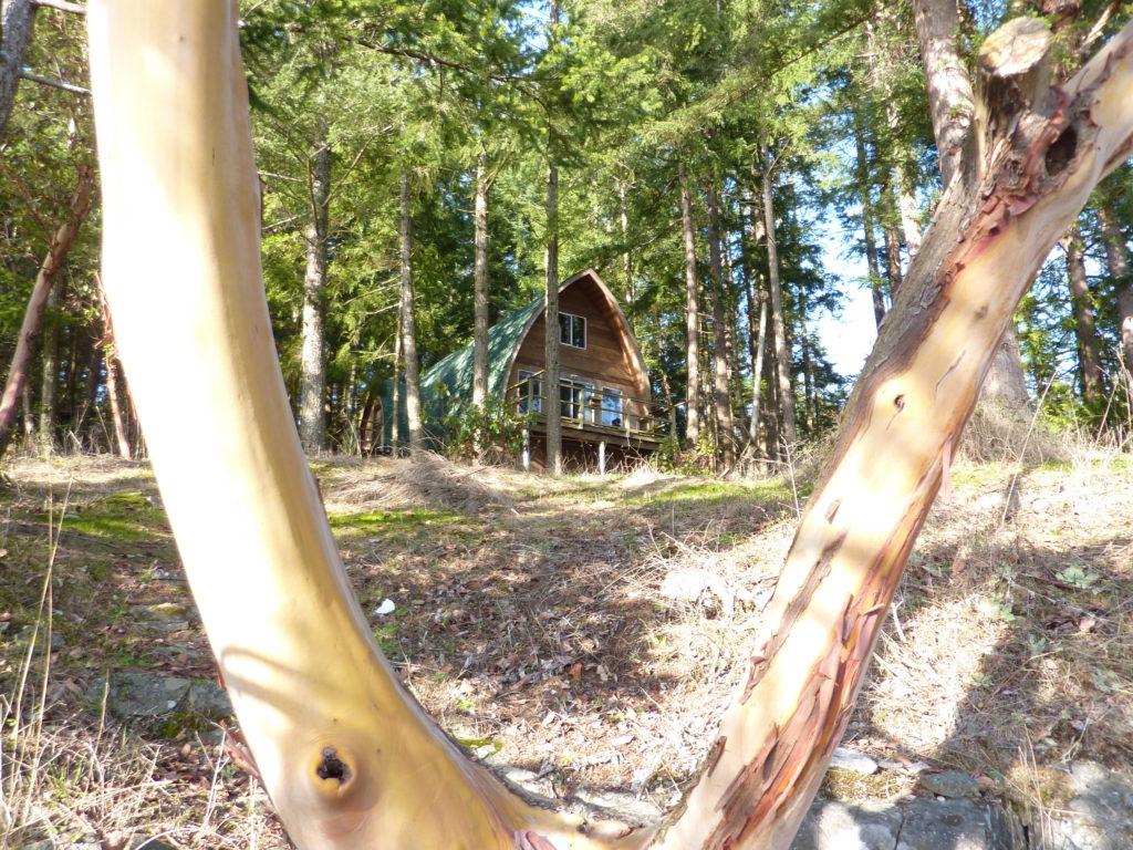 Cottage View Through The Arbutus Tree