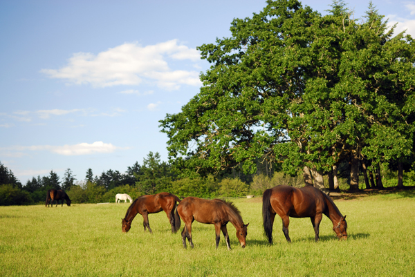 Equestrian 19 acs Deep Cove~sold