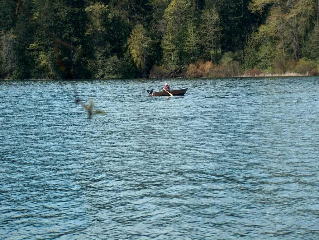 Rower On Elk Lake