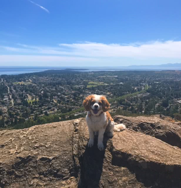 I'am Daisey On Mount Tolmie, Saanich
