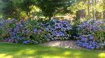 Garden @ Chateau de Lis
