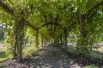 Grape Arbor~Chateau de Lis