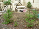 Foundations With Logix ~ Insulated Concrete Forms
