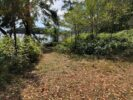 Waterfront Trail 4,47 acs Thetis Island
